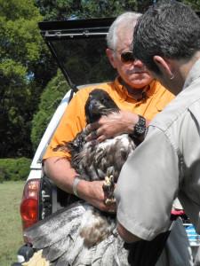 Eagle rescue