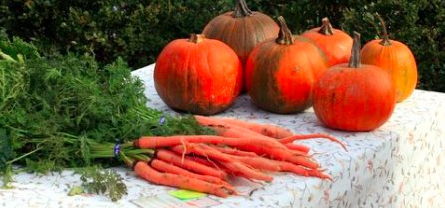 The Williamsburg Farmers Market will have plenty of pumpkins and other fall produce this week. (Courtesy Williamsburg Farmers Market)