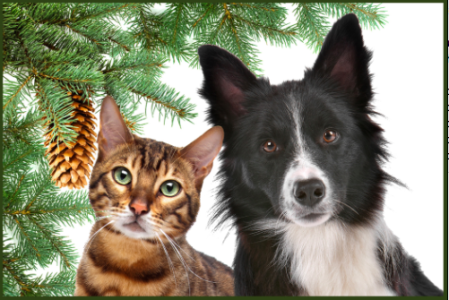The Heritage Humane Society's annual Christmas Bazaar is this Saturday at Bruton Parish Hall. (Courtesy Heritage Humane Society)