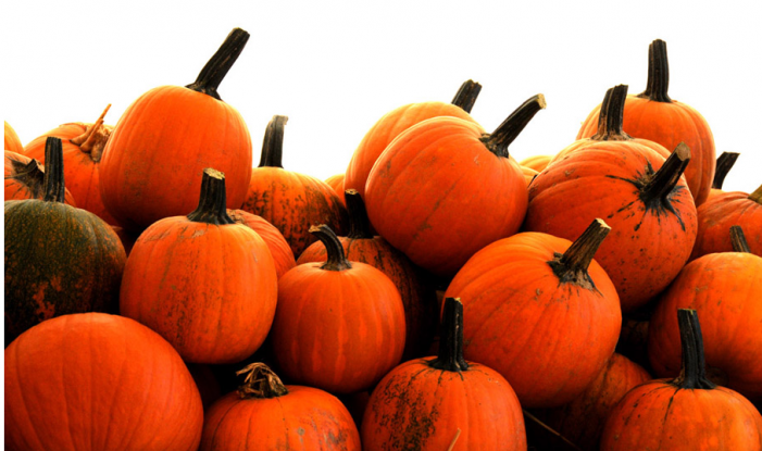 Strong pumpkin harvest this year, area farmers say