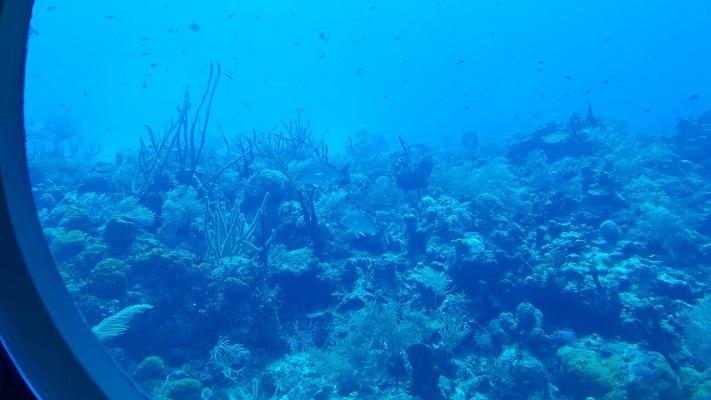 Coral reef as seen through a porthole of Atlantis. (Photo courtesy Ben Swenson)