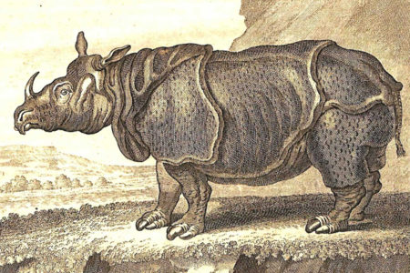 Copperplate engraving of an Indian rhinoceros, based on the 1749 painting Clara le Rhinoceros by Jean-Baptiste Oudry (1686-1755). (Courtesy W&M Libraries)