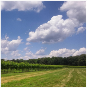 A recent study has shown the economic impact of Virginia's growing wine industry has increased 82 percent in five years. (Courtesy Williamsburg Winery)