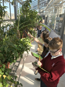 Student volunteer Cecilia Xingyu gives Walsingham students some pointers in a tropical plant scavenger hunt. (Erin Zagursky/W&M News)
