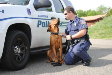 Police K9 Justice looks at his handler, Officer Scott Quesenbury. (Sarah Fearing/WYDaily)