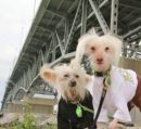 The September 9th Yorktown Market Days event features the third annual Paws at the River Pet Day at Riverwalk Landing from 8 a.m. to 12 p.m. (Courtesy York County)