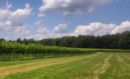 A love of the wine and culinary world led Michael Kimball to Williamsburg Winery, where he's worked for the past six years to promote the winery as a premier food and wine destination. (Courtesy Williamsburg Winery)