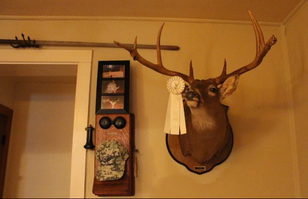 In the Dzula living room, a prize-winning taxidermied deer mount hangs next to several photos of Walter Dzula with the same deer in the back of his red truck. A white ribbon hangs from the almost thirty-inch-wide antlers. (Sarah Fearing/WYDaily)