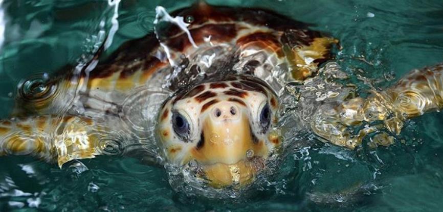 Virginia Living Museum reveals new turtle's winning name