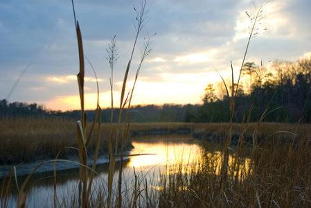 Taskinas Creek es un gran lugar para pescar o disfrutar de las serenas vistas del agua.  (WYDaily / Cortesía del Parque Estatal York River)