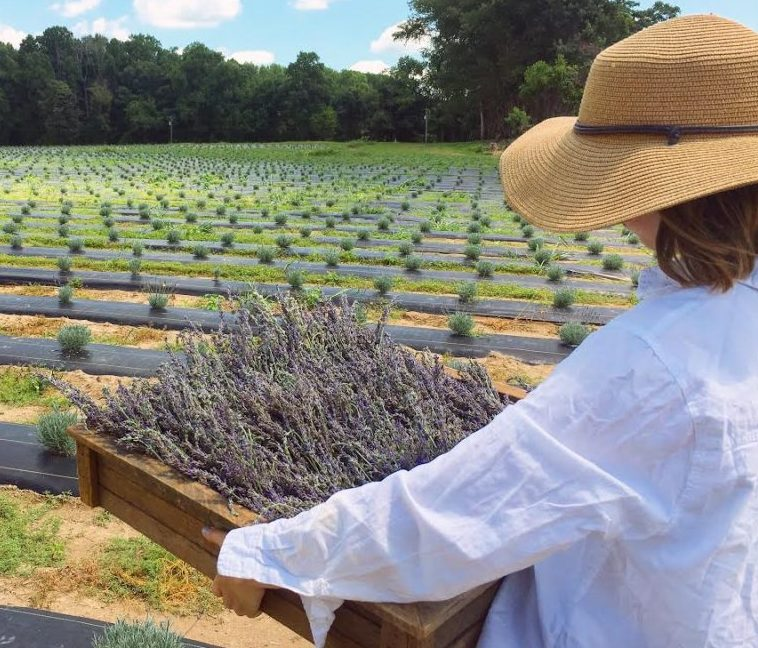 Owner of Sweethaven Lavender farm of Williamsburg, Kerry Messer, captures a shot of her daughter, Hannah, in front of their farm's fields. (WYDaily/Courtesy of Kerry Messer)