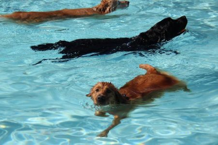 Drool in the Pool will take place on September 7 of this year to raise funds for Heritage Humane Society.  (WYDaily / Courtesy of Heritage Humane Facebook)