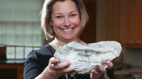 Rowan Lockwood displays one of the 900 oyster fossils studied in a palaeobiological analysis of Chesapeake Bay oysters. (Stephen Salpukas/VIMS/WYDaily)